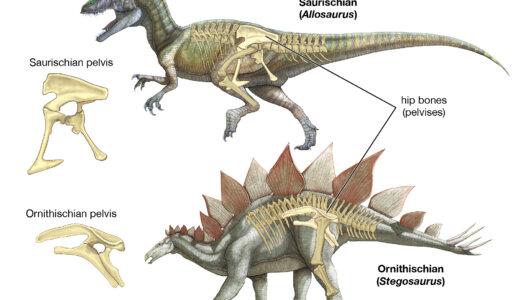 恐竜の種類:鳥盤類と竜盤類の違い