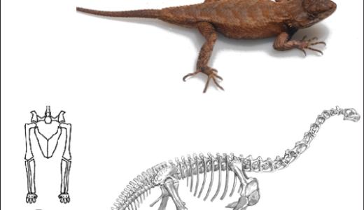 恐竜と爬虫類の違いとは?