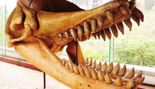 メガロドンすら捕食した最強のクジラ「リヴィアタン・メルヴィレイ」