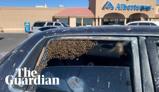 【動画】買い物から帰ってきたら15000匹のミツバチに車を占拠されていた件