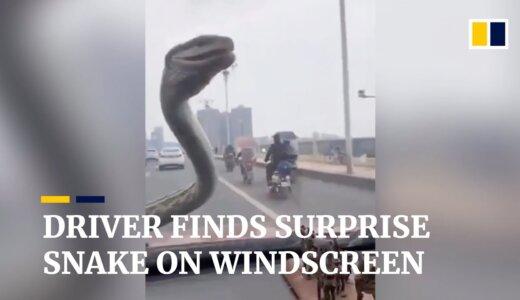 【動画】邪魔すぎぃ!!フロントガラスでワイパーみたいに動くヘビ
