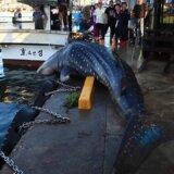 【動画】ジンベイザメが捕獲されて漁港に連れてこられるも乱暴に海に返される