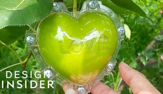 【動画】すごー!!果物にケースをつけたまま成長させてハート型や色んな形にしてみた