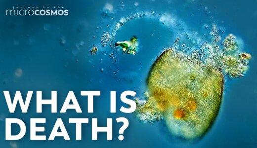 【動画】繊毛虫、体が分解しながら泳ぎ回るも死亡する