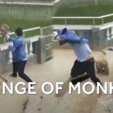 【動画】手すりに座って池を見ていたサル、人間に突き落とされて激怒