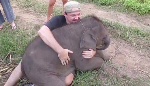 【動画】抱きしめられるのが大好きな赤ちゃんゾウ、人間にデレデレ