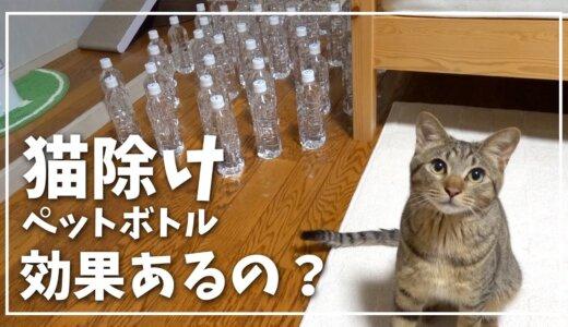 ネコ除けのペットボトルは全く効果がない