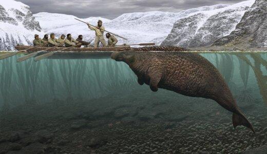 発見から僅か27年後には絶滅したステラーカイギュウ