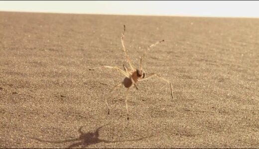 砂漠で高速に移動するためにグルグル転がることを思いついたヤツ「シャリングモ」