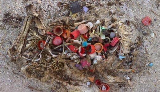 【画像】プラスチックを食べ過ぎて死んだ海鳥たち