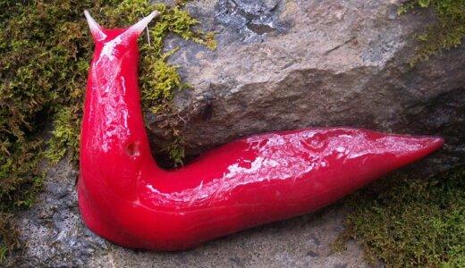 全身真っ赤でウネウネ!形容しがたい不安感を与えてくるヤツ「レッドトライアングルナメクジ」