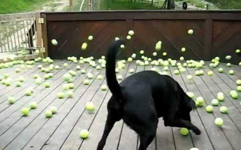 【動画】はやくボール落としてくれよぉ!とせがんだら、とんでもない量のボールを落とされた件
