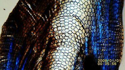 ウナギには皮膚に埋もれた6万枚の鱗がある
