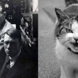 【狂実験】ネコの頭を電極につないでネコ電話を作成した実験